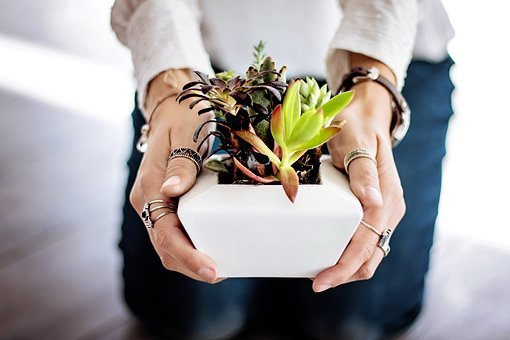 App to Learn How to Care for Plants: See How to Download for Free